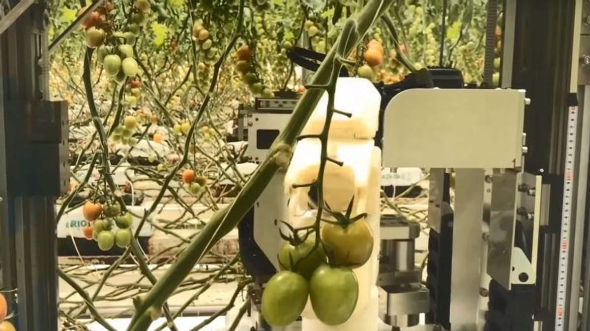 Panasonic  навчила роботів працювати на фермі: відео