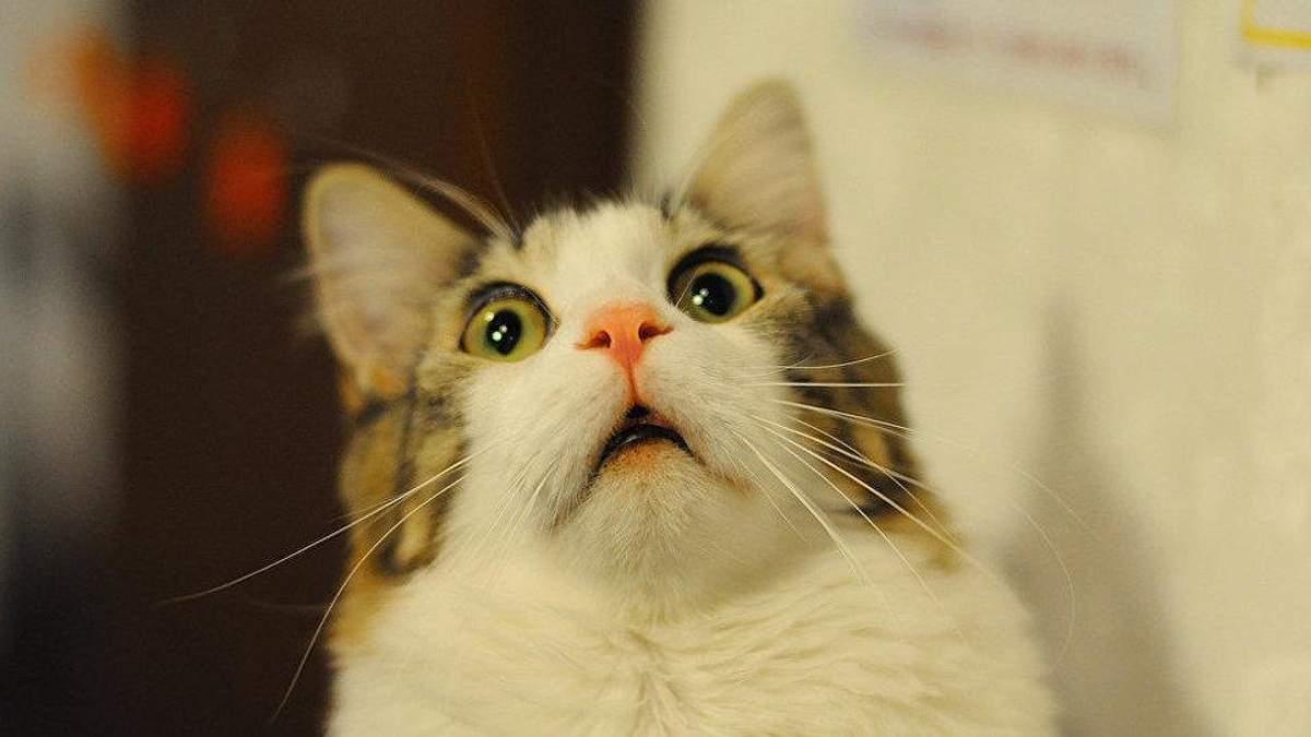 """Люди """"позволили"""" искусственному интеллекту убивать котиков"""