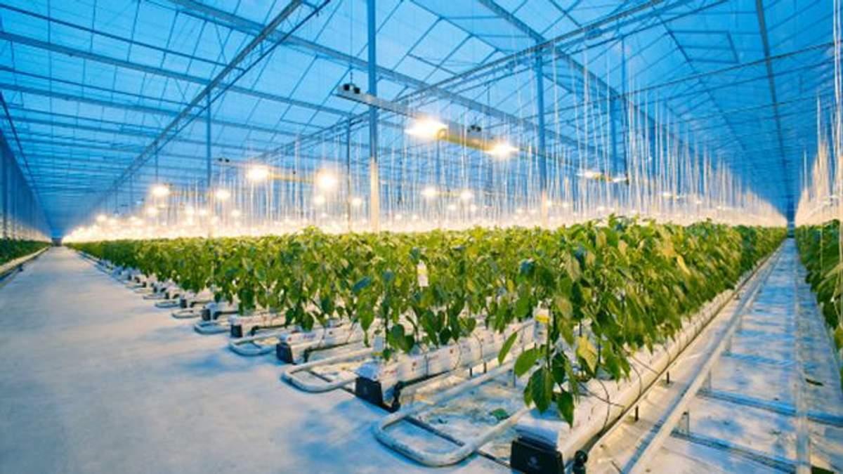 Штучний інтелект від Microsoft найкраще вирощує огірки
