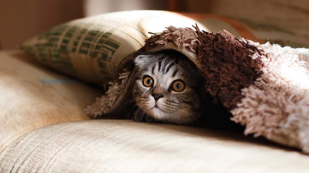 Створили інноваційний притулок для котиків