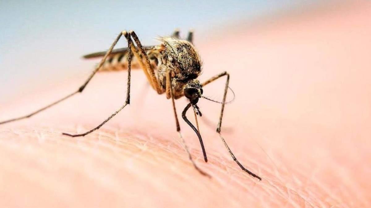 Украинцы разработали девайс, который борется с комарами и безопасен для человека