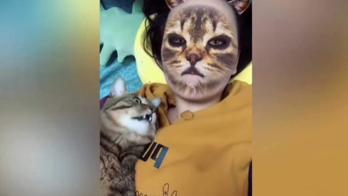 Реакция кошек очень забавная