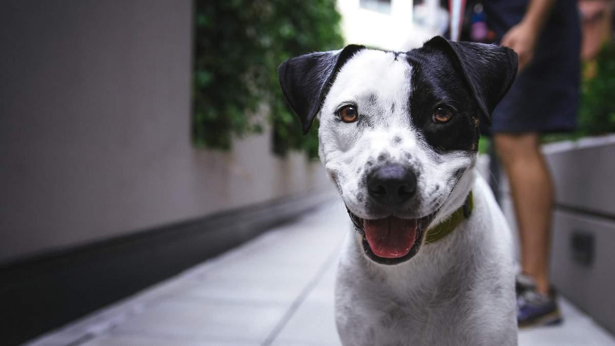 Представили пристрій, який розпізнає емоції собак: відео
