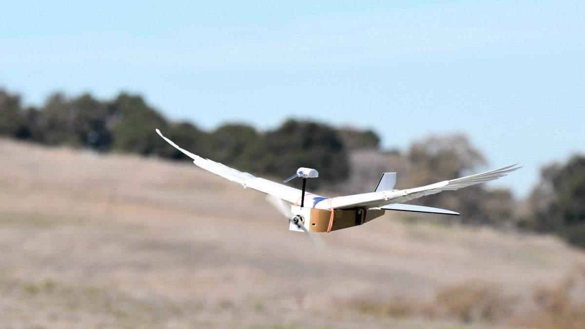 Робототехніки створили дрон з крилами на пір'ї голуба