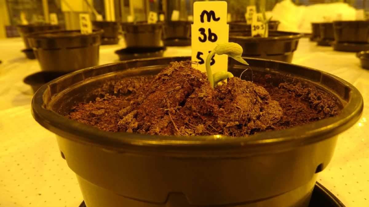 Растения на марсианском грунте могут расти лучше, чем на земном: создали интересное решение