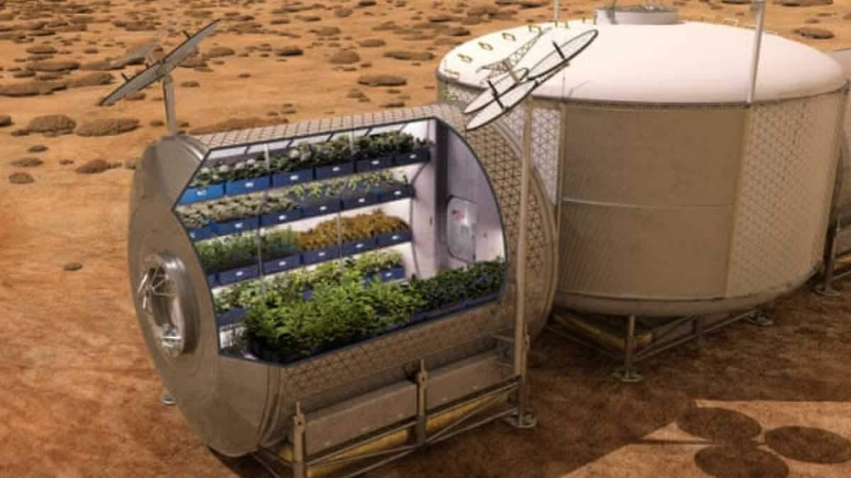 На орбіті успішно виростили салат