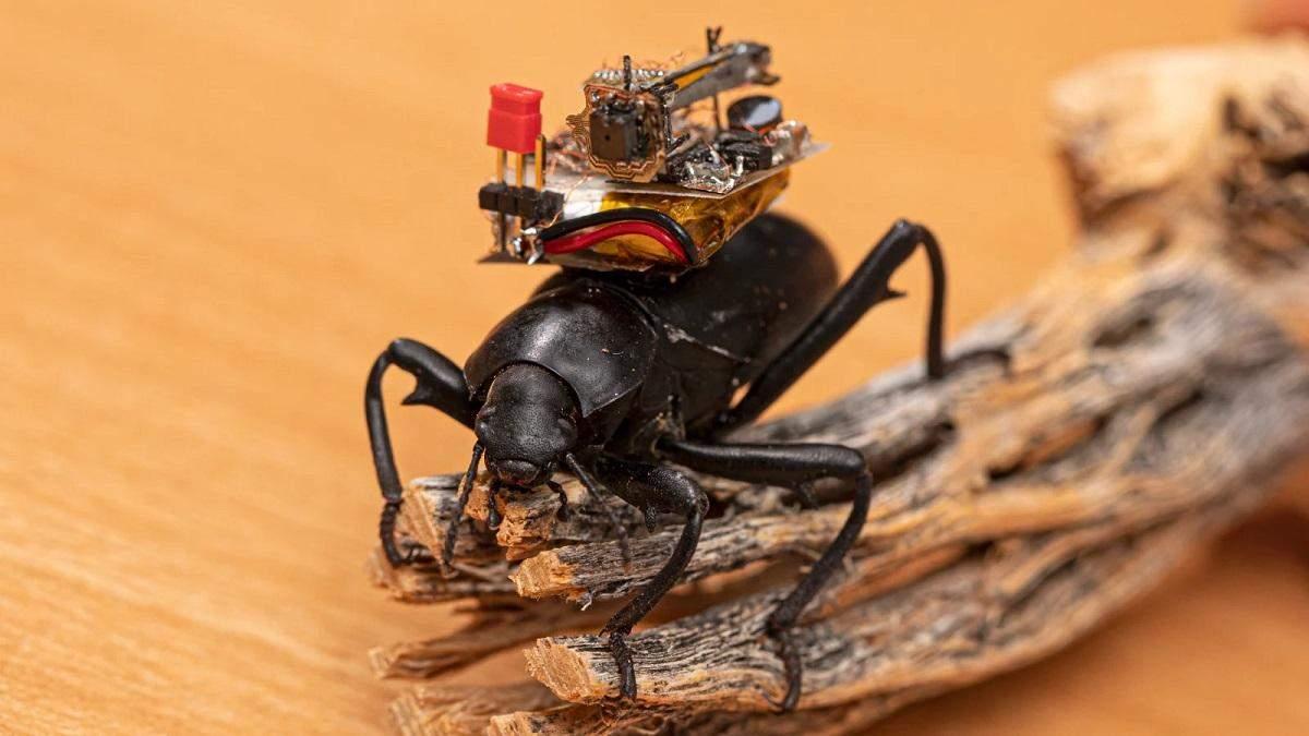 Исследователи создали видеорегистратор для жуков и увидели мир глазами насекомых