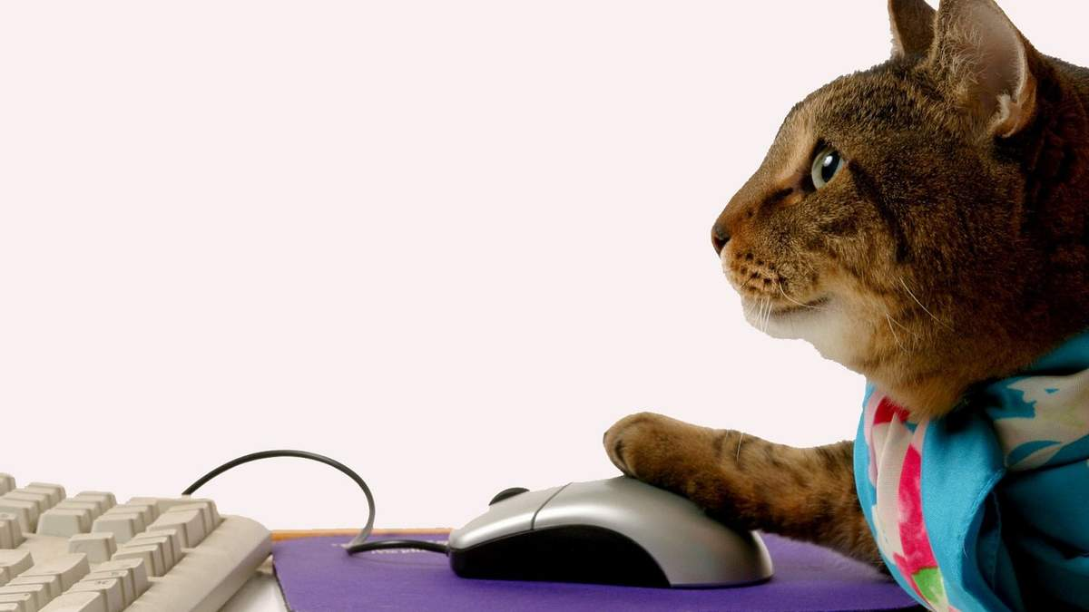 Сайты, которые помогут побороть скуку: список