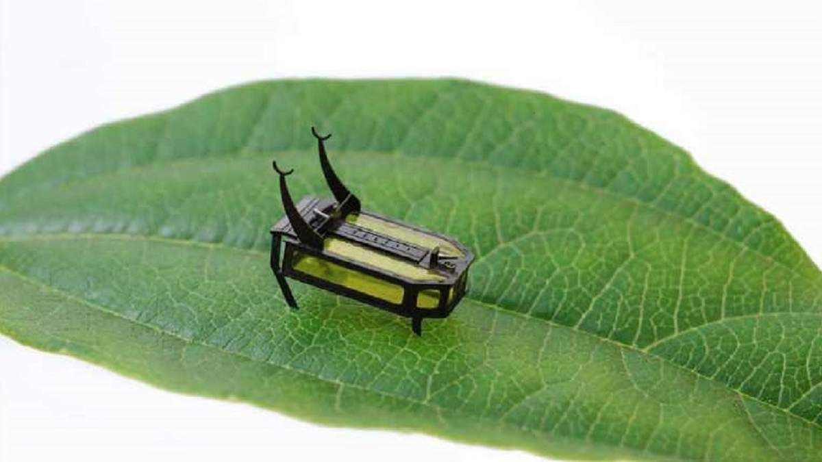 The RoBeetle