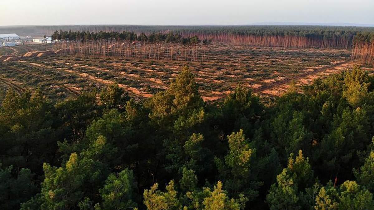 Немецкий суд дозволивTesla осуществить клиринг леса под новый завод