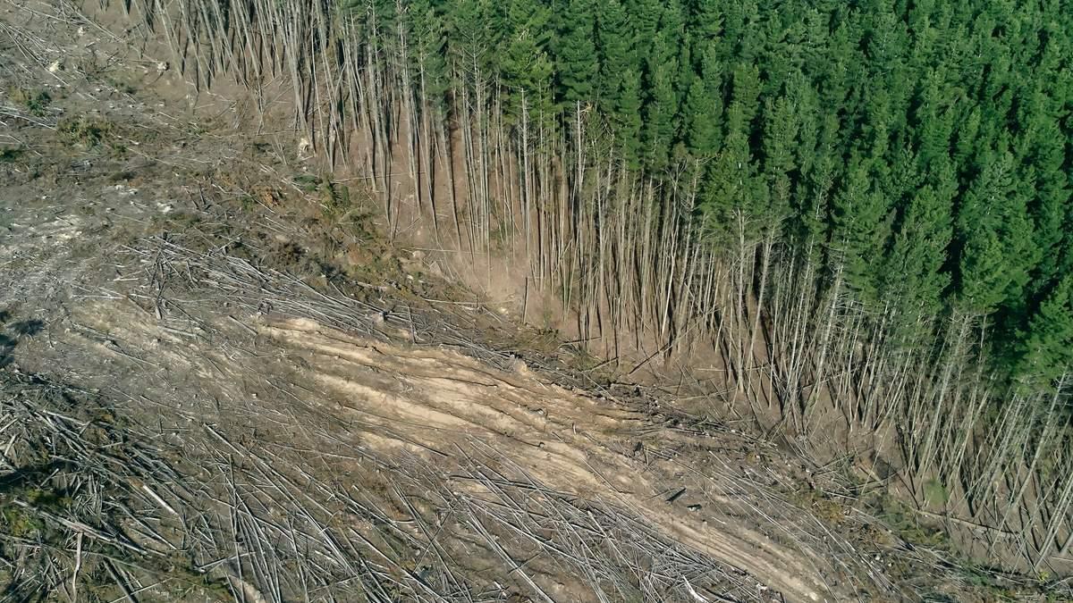 Массовое восстановление лесов не поможет против изменений климата