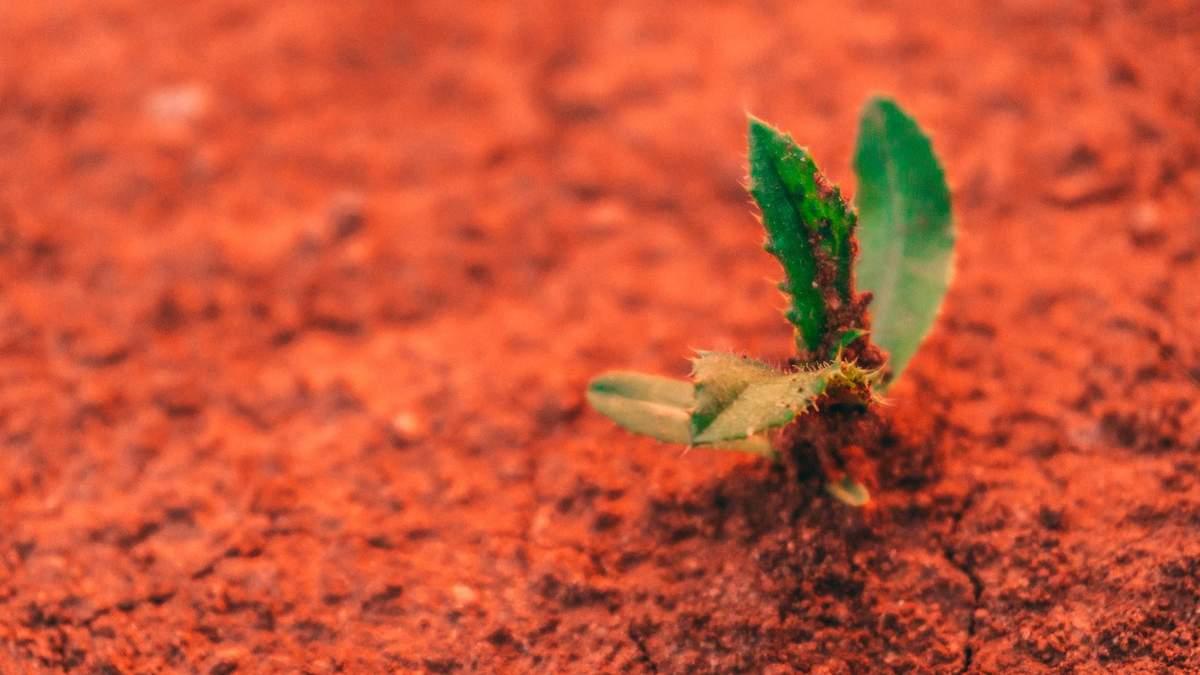 Curiosity дізнався, що могло стерти сліди життя з поверхні Марса