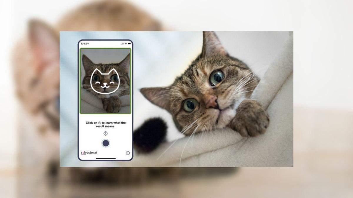 Штучний інтелект навчили оцінювати самопочуття котів і створили спеціальний додаток - Новини технологій - Техно