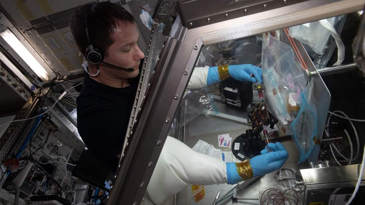 На МКС вырастили ткани человеческого организма: для чего это нужно