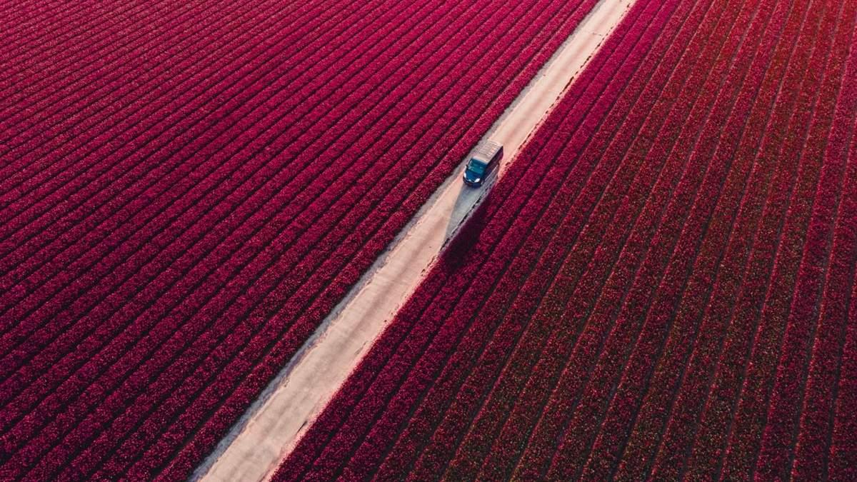Фотоконкурс Drone Awards 2021 оголосив переможців: епічні аерофотознімки - Новини технологій - Техно