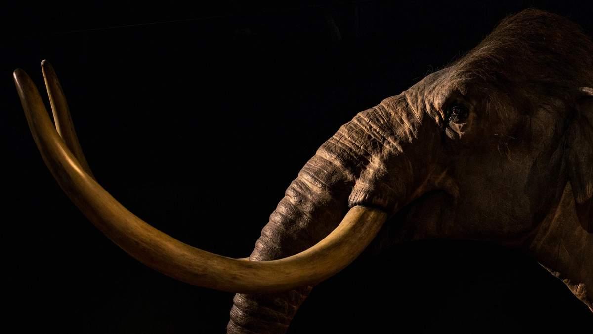 Американський стартап воскресить мамонтів: коли чекати на перших гігантів - Новини технологій - Техно