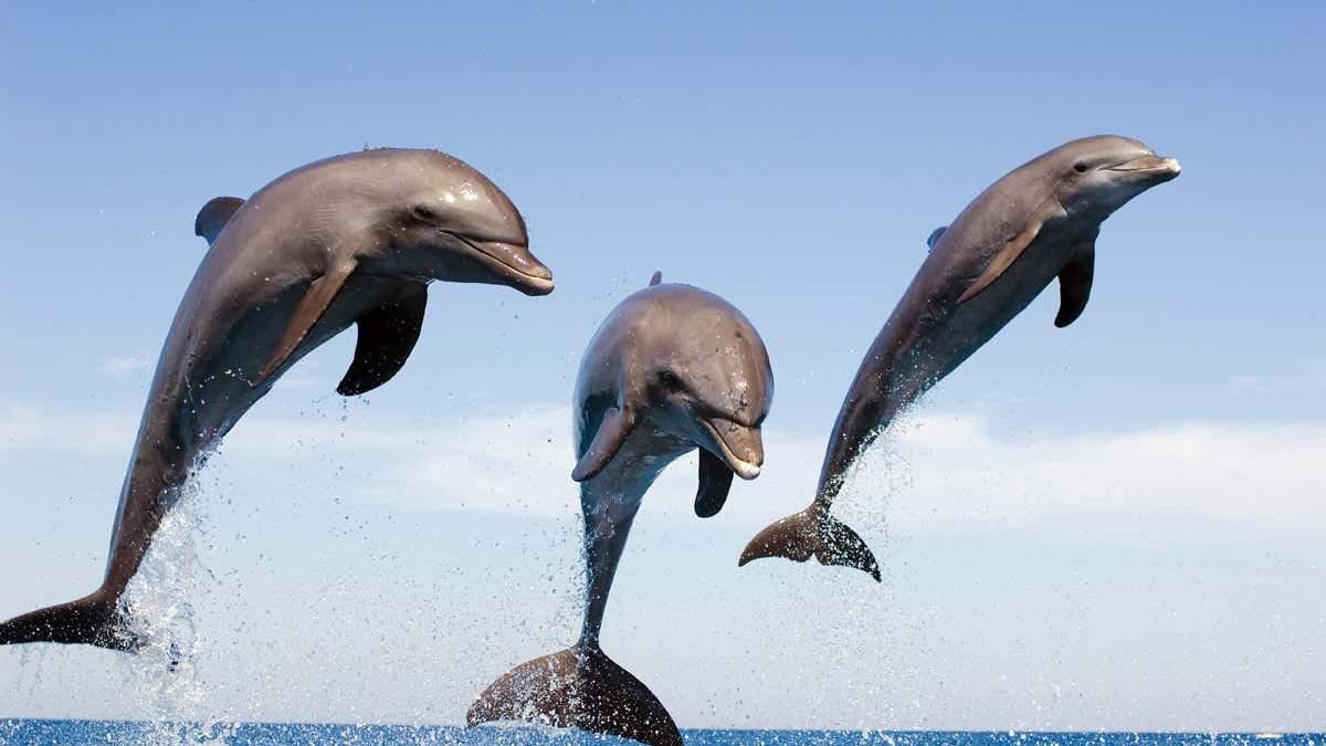 """Свит допоможе розшифрувати """"мову"""" дельфінів: дослідження - Новини технологій - Техно"""