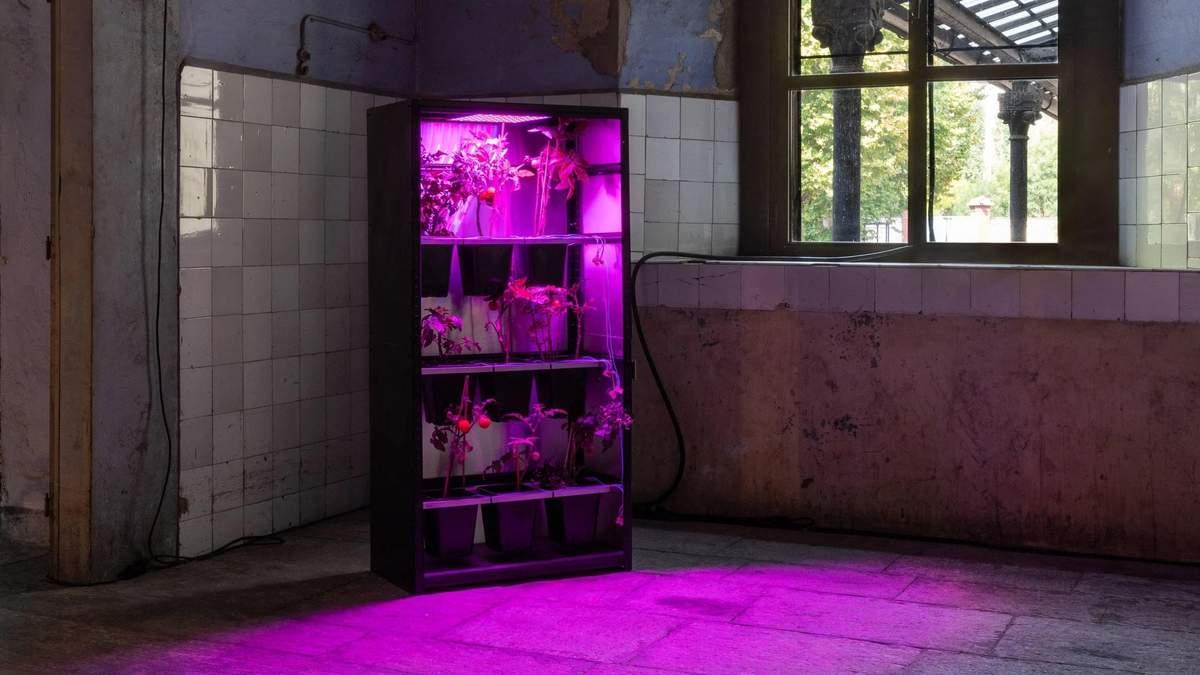 Чоловік створив сервер, який працює на помідорах: фото незвичної системи - Новини технологій - Техно
