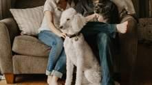 Неприятный запах и шерсть от пушистых животных: как можно очистить от этого дом