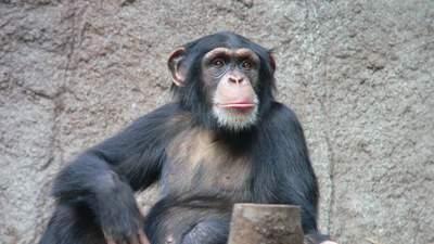 Есть ли у животных религия: исследование