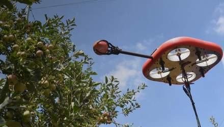 В Израиле разработали летающего автономного робота для сбора фруктов: что известно