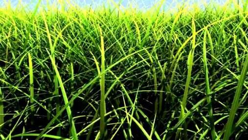NVIDIA представила технологию, которая создает огромное количество травинок
