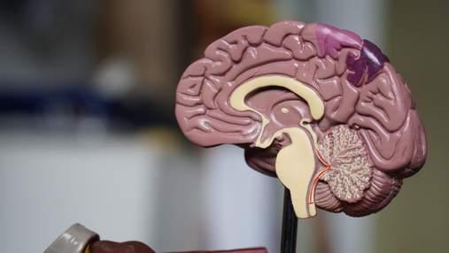 Представили самую большую в мире 3D-карту мозга: видео