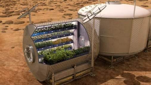 На МКС вырастили салат: какова цель эксперимента