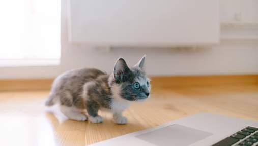 """MeowTalk: з'явився унікальний додаток для перекладу з котячої """"мови"""" на людську"""