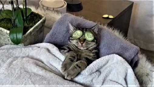 Спа для кота: відеоролик з котом, який насолоджується спа-процедурами,  став вірусним у тіктоці