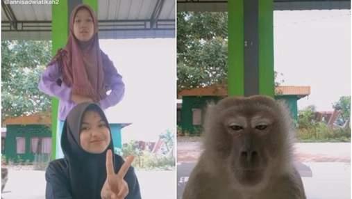 Подруги снимали видео в тикток, но им помешала настоящая обезьяна: она стала звездой сети