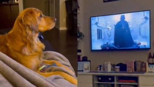 """Як собака реагує на Дарта Вейдера в """"Зоряних війнах"""": кумедне відео стало вірусним"""