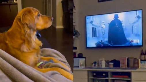"""Как собака реагирует на Дарта Вейдера в """"Звездных войнах"""": смешное видео стало вирусным"""