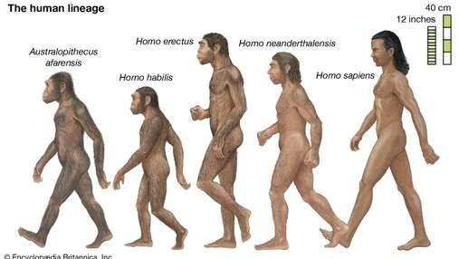 Климатическое раскачивание в Африке считают причиной эволюции человека: исследование