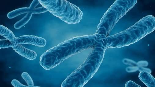 Скільки важать хромосоми людини: вчені мають відповідь