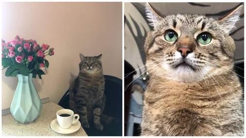 Невозмутимый кот Степан из Харькова стал звездой тиктока
