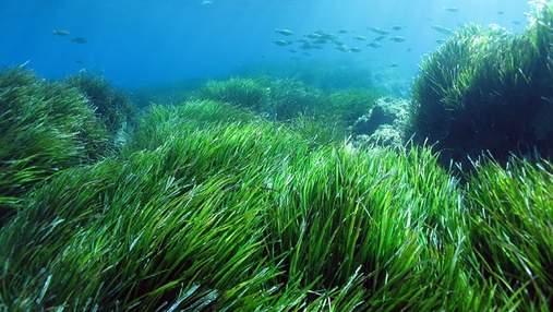 Штучні шуми, спричинені людьми, можуть нашкодити морським водоростям: нове дослідження