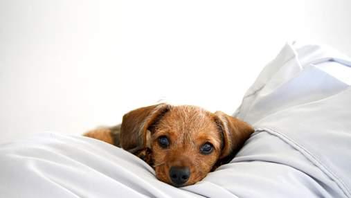 Почему полезно пускать собаку в свою постель: интересное объяснение