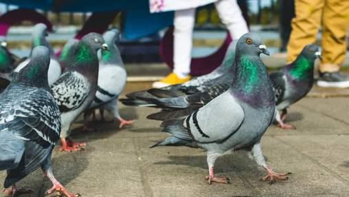 У всьому винні голуби: Starlink Ілона Маска скаржиться на перебої в інтернеті