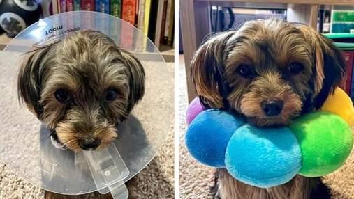 """Власники """"приборкали"""" своїх тварин кумедними способами: курйозні фото"""