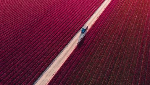 Фотоконкурс Drone Awards 2021 оголосив переможців: епічні аерофотознімки