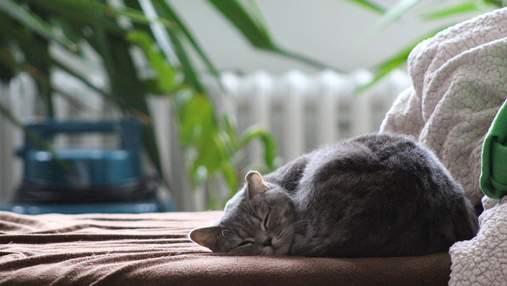 Котів не заспокоюють речі, які пахнуть господарем, – нове дослідження