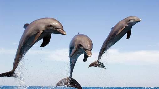"""Свист допоможе розшифрувати """"мову"""" дельфінів: дослідження"""