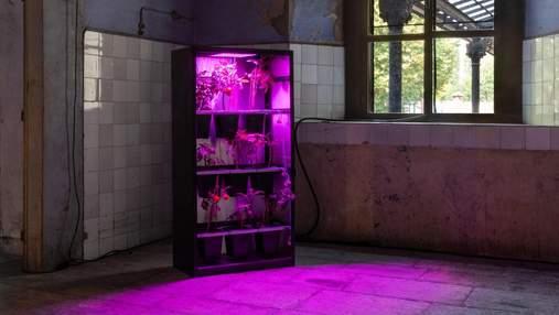 Чоловік створив сервер, який працює на помідорах: фото незвичної системи