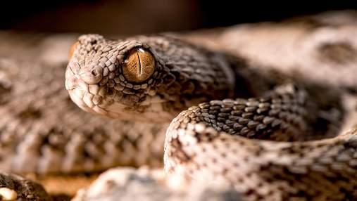 Що спричинило розвиток та розповсюдження змій: вчені знайшли відповідь на питання