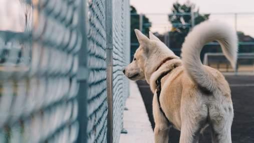 Не тільки від щастя: вчені розповіли, чому собаки виляють хвостом