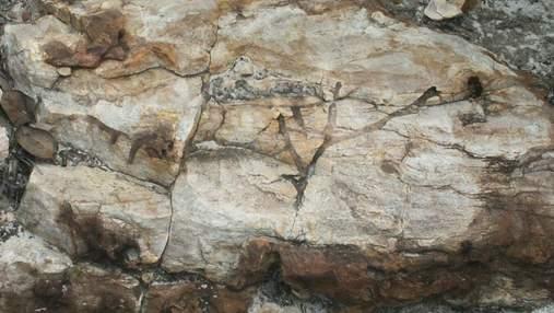 Вчені розв'язали загадку, якій 1,7 мільярда років