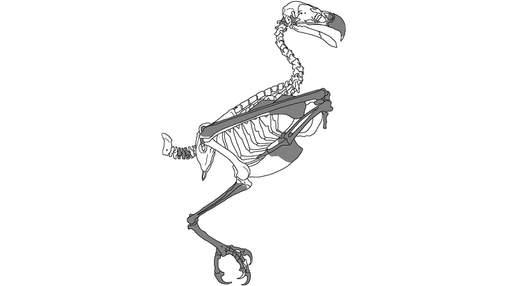 Вчені відкрили новий вид орла, який жив 25 мільйонів років тому