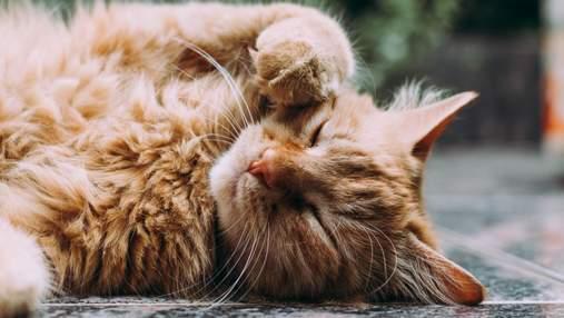 Спасенный кот очаровал соцсети своим позированием: фото пушистой модели