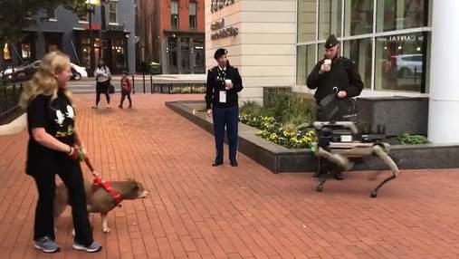 В США на прогулку вывели роботов-собак Boston Dynamics: как на них реагировали собаки